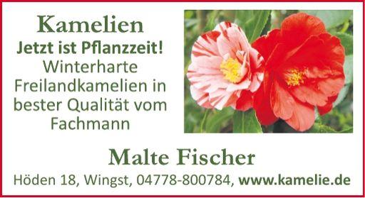 Kamelien Malte Fischer